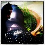 a herb garden makes a good footrest