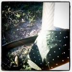 chevron stripe tights and polka dots